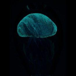 Glass Jellyfish Paperweight
